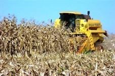 Produtores de milho safrinha têm esta semana para avaliar perdas e recorrer ao seguro agrícola